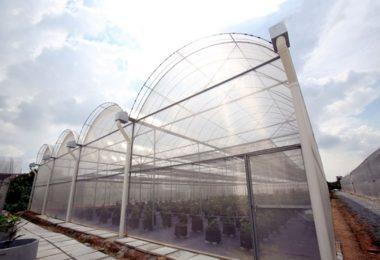 fig-farm-1