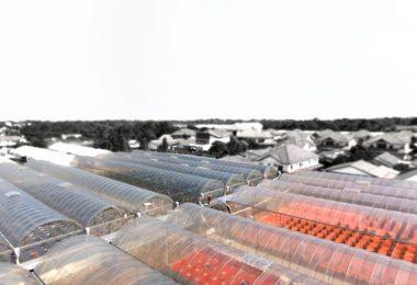fig-farm-2